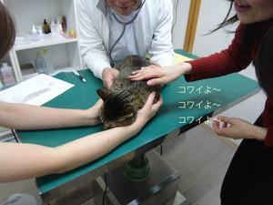Masago_4