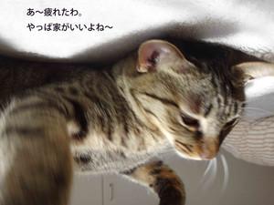 Masago_5