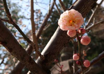 Masago2_2