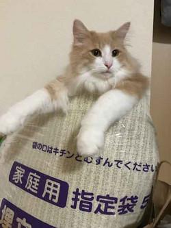 Masago6_2