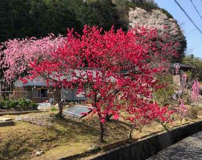 Masago901jpg