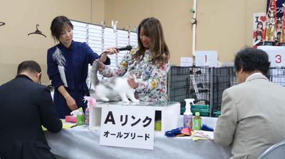 Masago901jpg_2