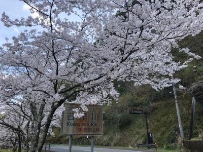 Masago218_1